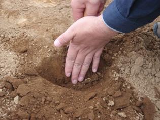 土壌診断4