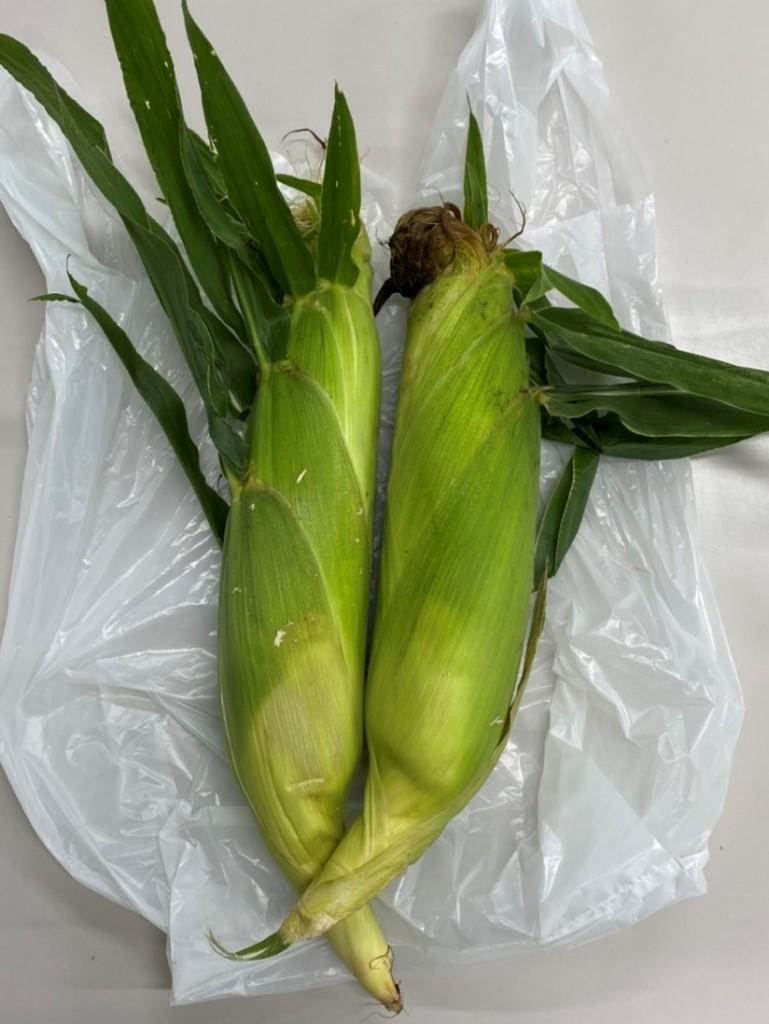 ブログ(稲垣課長)_トウモロコシ出荷品20200701